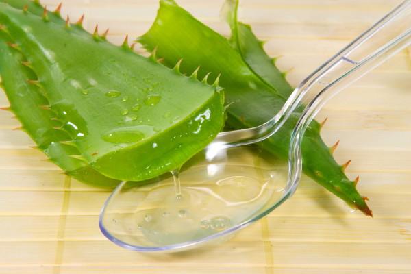 Семена после замачивания в соке алоэ обязательно просушивают бумажной салфеткой
