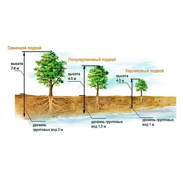 Схема посадки деревьев в соответствии с геодезическими особенностями участка