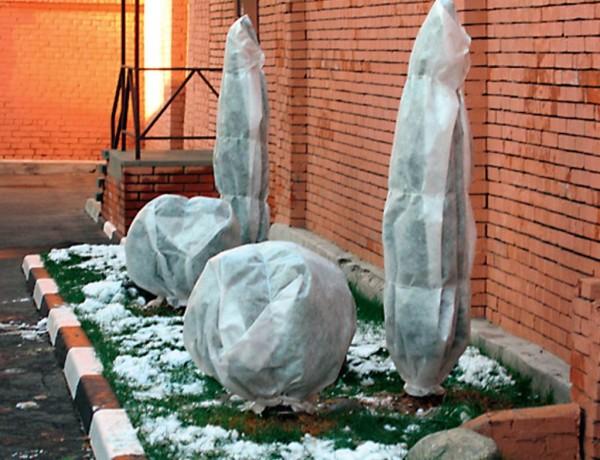 Снимайте защитные чехлы с растений аккуратно