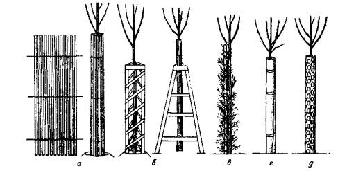 Способы защиты дерева от зайцев