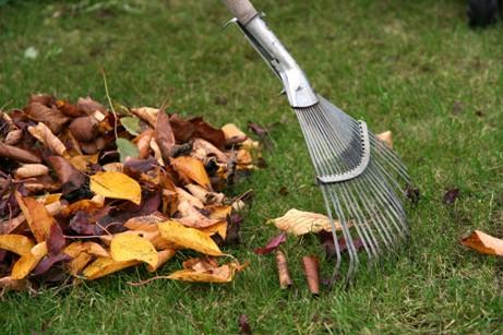 Сухую листву и траву следует собрать, чтобы облегчить рост молодым побегам