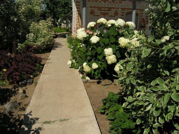 Так смотрятся цветы вдоль садовых дорожек такого типа.