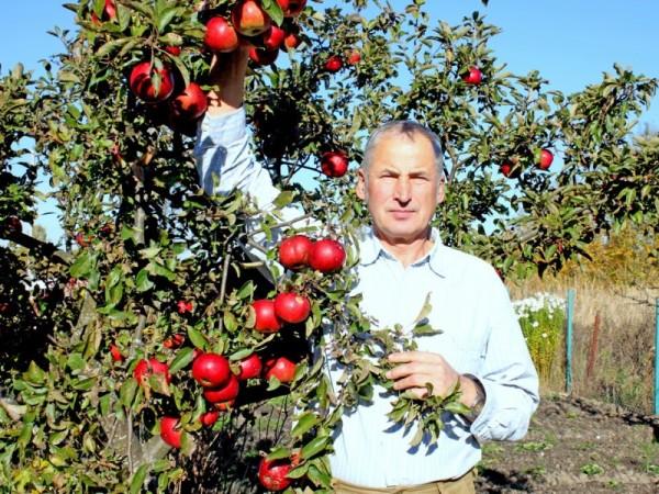 Такие яблоки можно вырастить на даче своими руками