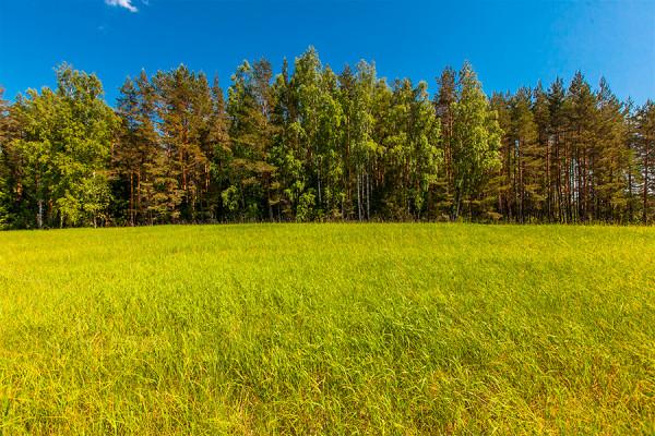 Участки сельскохозяйственного назначения вряд ли удастся перевести под индивидуальную жилищную застройку, помните об этом