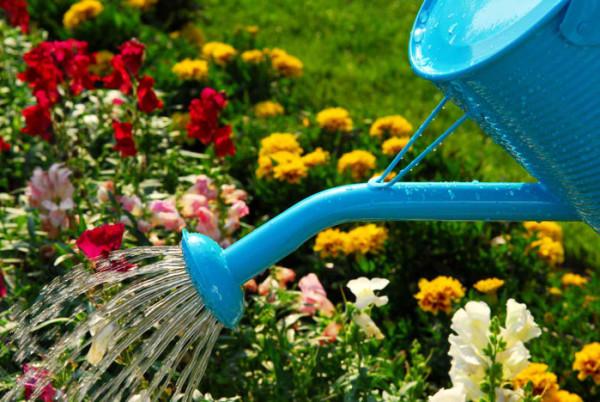 Ухаживайте за садом, если хотите получить хороший урожай!
