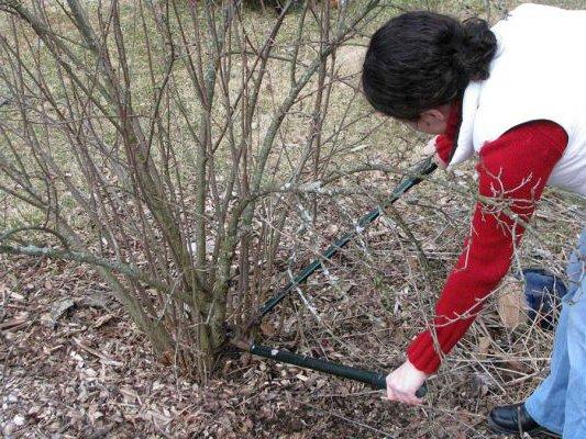 Уход за садом ранней весной– важный этап его развития