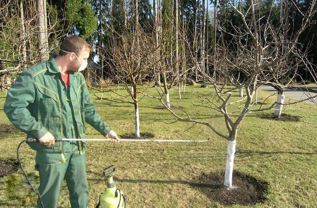 Весенний уход за садом– опрыскивание и обработка деревьев