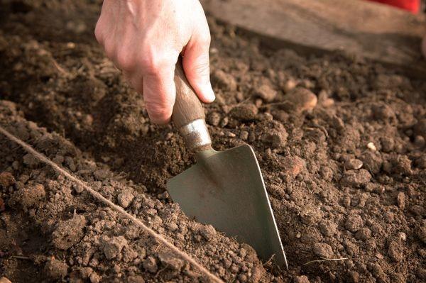 Выполнение ямок для посадки земляники