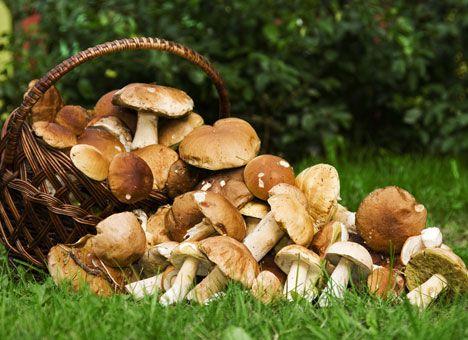 Выращивание грибов на садовом участке– интересное и полезное занятие, которое можно превратить в хобби