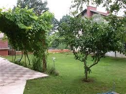 Высаживая фруктовые деревья, убедитесь, что они не будут большую часть дня находиться в тени