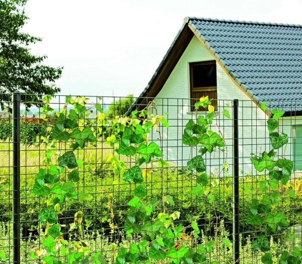 Вьющиеся растения хорошо дополняют решетку на границе участка.
