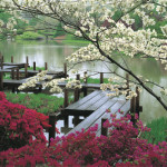 Японский сад фото