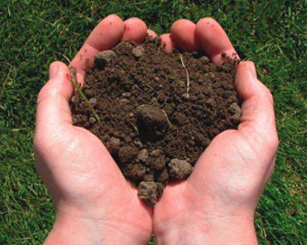 А какая почва на вашем участке?