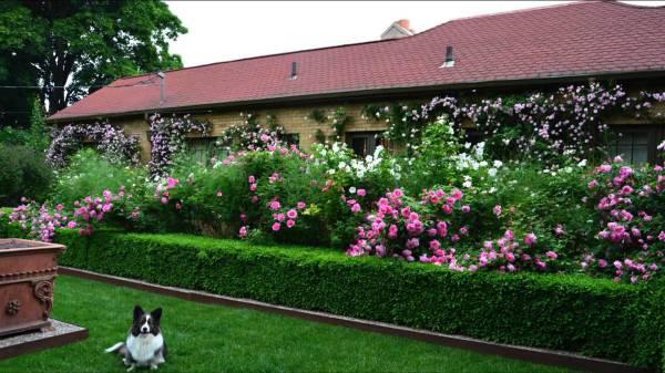 Буйство ярких цветов и сочной зелени скроет вашу жизнь от посторонних глаз
