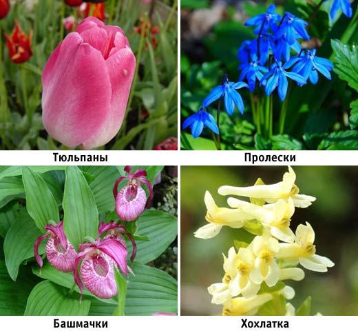 Четыре наиболее популярных весенних растений