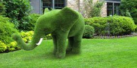 Чтобы создать такую скульптуру необходимо выждать несколько лет, пока растение не достигнет нужных размеров