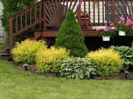 Декоративные растения способны украсить ваш сад своими красивыми листьями