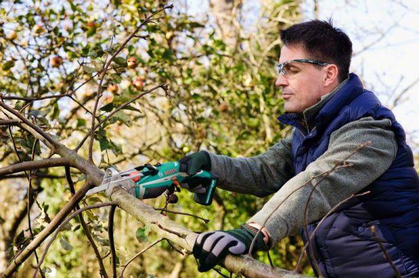 Деревья в саду необходимо регулярно обрезать.