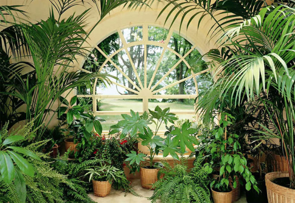 Для своего зимнего сада выбирайте растения из одной климатической зоны