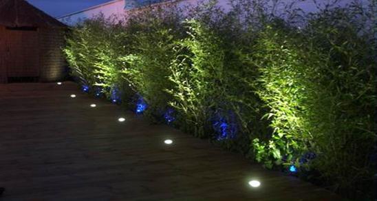 Элегантная и аккуратная подсветка кустарников