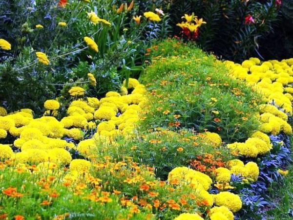 Это красивое растение может быть высажено и у вас на участке!