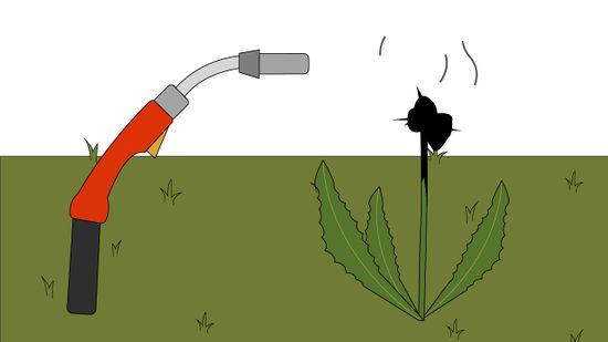 Растение погибнет, если обжечь его газовой горелкой