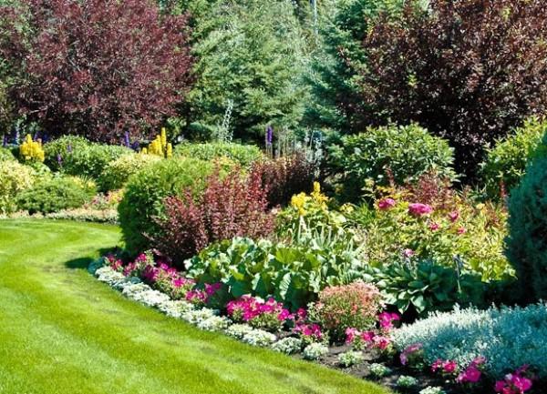 Фото: кустарники различного типа в саду значительно преображают пространство