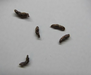 Фото мышиного помета