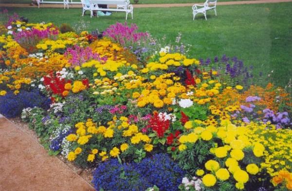 Фото: цветущие все лето растения сделают ваш участок неотразимым