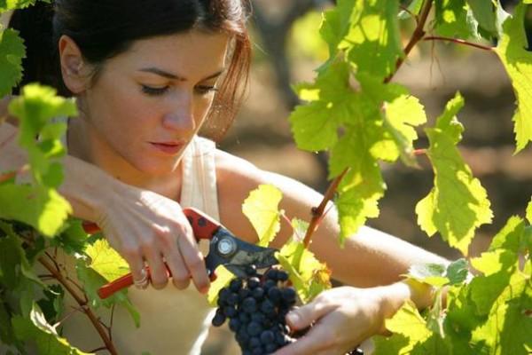 Фото: виноградарство и садоводство тесно связаны друг с другом, а сбор урожая – гордость садовода