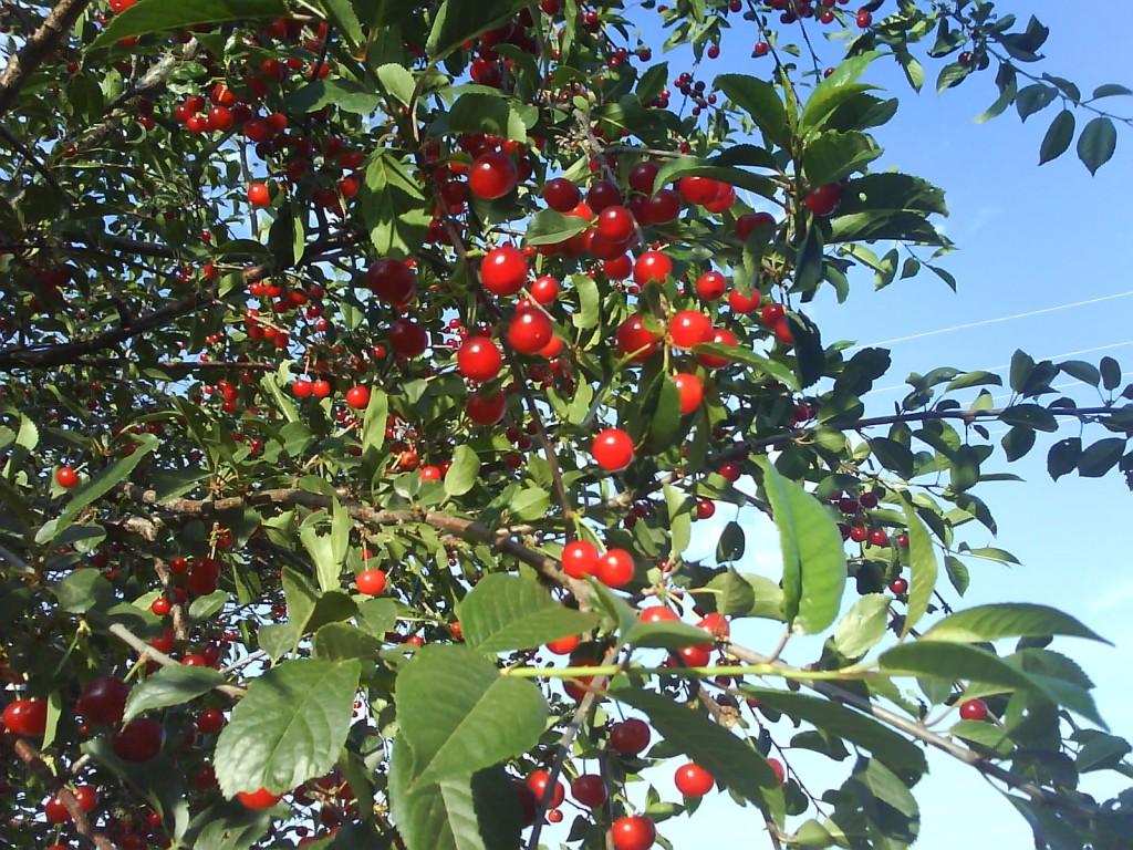 фото сада фруктового