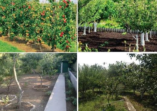 Фруктовое садоводство – полезно и приятно