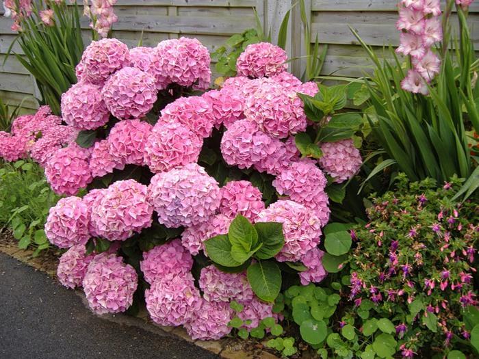 Многолетние цветы, цветущие все лето: фото и название