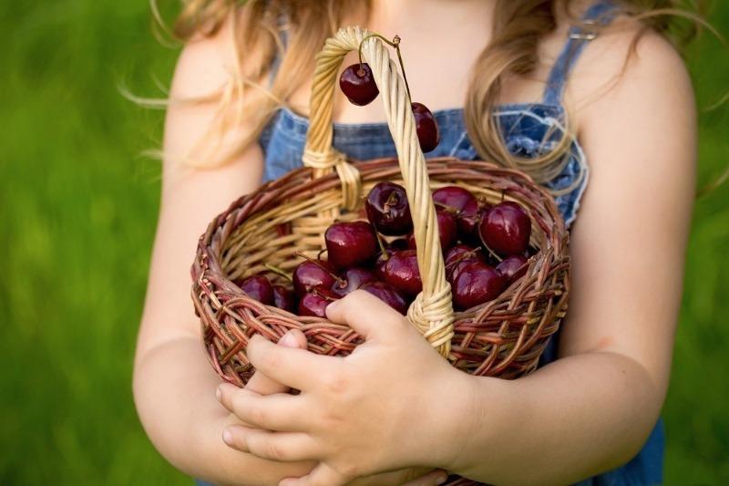 Вишня шалунья описание сорта - Сад и огород