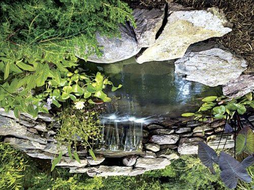 Изысканный пруд