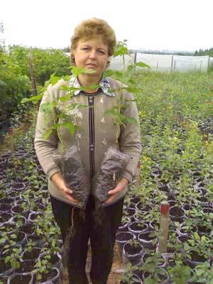 Качественный посадочный материал гарантированно дает обильный урожай