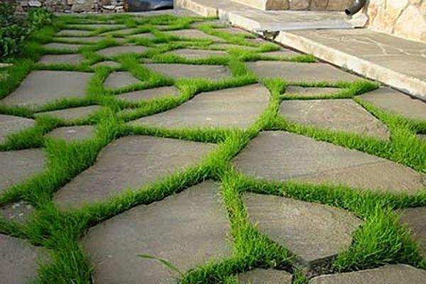 Карликовая газонная трава между камнями