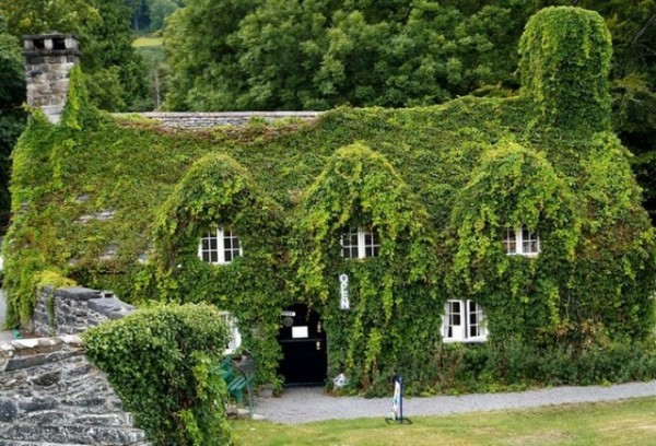 Многоэтажный особняк, полностью обросший вечнозелёным плющом