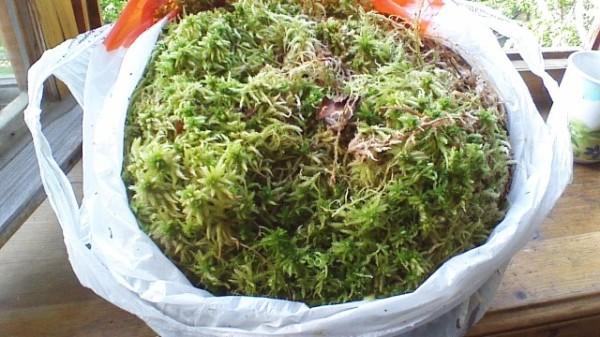 Мох на дачном участке также подходит для изготовления компоста