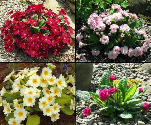 На фото - растения для загородного участка