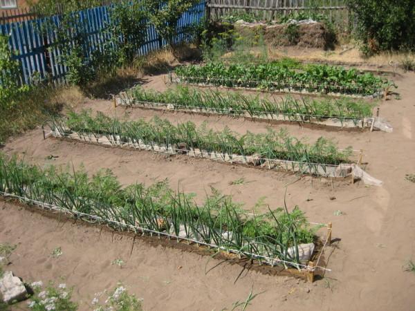 На фото – дачный участок с органическим способом земледелия