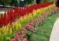 На фото – многолетние растения различной высоты