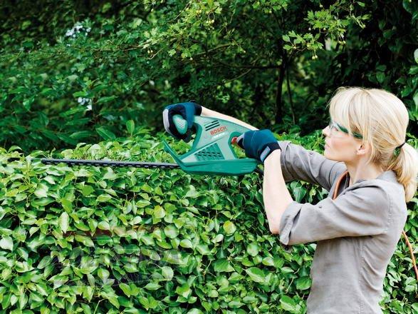 На фото – работы при подстрижке живой изгороди
