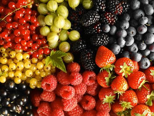 На фото – разнообразные ягоды, выращиваемые в саду