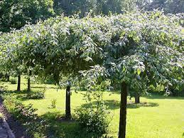 На фото – сад из карликовых деревьев