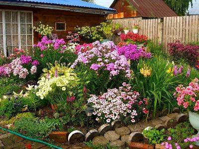 На фото многолетние цветы – истинное украшение дачного участка