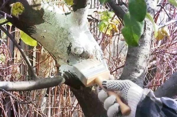 На фото обработка деревьев защитными составами