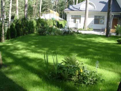 На фото: садовый участок с небольшими клумбами тенелюбивых растений