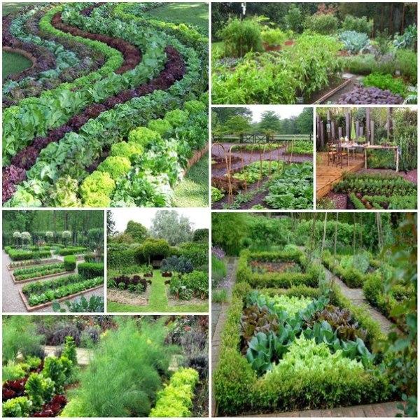 На фото варианты оформления красивого огорода