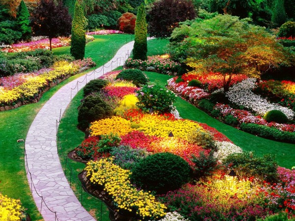 Насаждения с многолетними цветами – чудо приусадебного дизайна